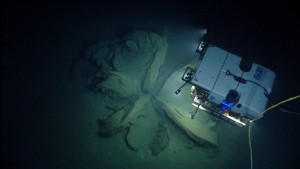 "D2 discovers the remnants of asphalt volcanoes, or ""tar lilies."" Image courtesy of NOAA Office of Ocean Exploration and Research, Okeanos Explorer Gulf of Mexico 2014 Expedition."